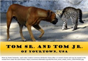 "Junior-senior confusion. Image of dog and cat with caption ""Tom Sr. and Tom Jr. of Yourtown, USA"""