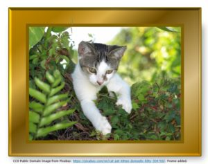 Speculative Tree Climbing in Genealogy -- A Kitten Up a Tree